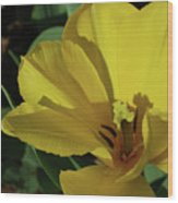 A Close Up Look At A Yellow Flowering Tulip Blossom Wood Print