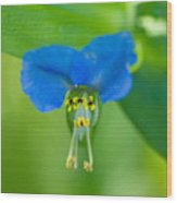 A Close-up Of A Bright Blue Flower Wood Print