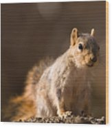 A Close-up Of A Fox Squirrel Sciurus Wood Print by Joel Sartore