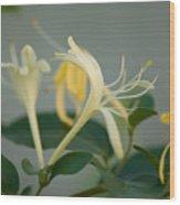 A Close Up Of Honeysuckle Wood Print