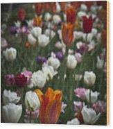 A Cluster Of Tulips Wood Print