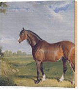 A Clydesdale Stallion Wood Print by John Frederick Herring Snr