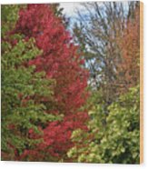 A Collection Of Fall Colours Wood Print