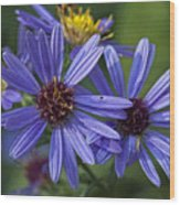 A Color Purple Wood Print