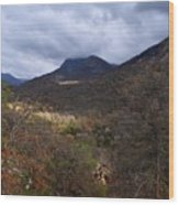 A Colorful Scene Of Burned And Lush Interspersed Foliage In The Southwest Foothills Of The Sierra Ne Wood Print