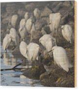 A Congregation Of Egrets Wood Print