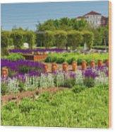 A Corridor Of Purple Sage Flowers And Stachys Lanata Sunlit Wood Print