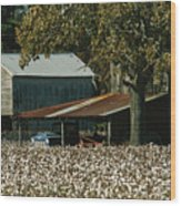 A Cotton Field Surrounds A Small Farm Wood Print by Medford Taylor