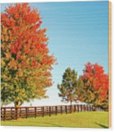 A Country Autumn Wood Print