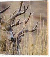 A Couple Of Bucks Wood Print