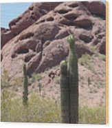 A Couple Of Cacti In Phoenix Wood Print