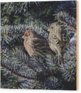 A Couple Of House Finch Wood Print by LeeAnn McLaneGoetz McLaneGoetzStudioLLCcom