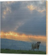 A Cow In The High Prairies  At Sunset Wood Print