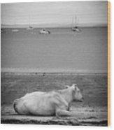 A Cow On The Beach Wood Print