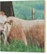 A Cow's Tale - Lazy Day Wood Print