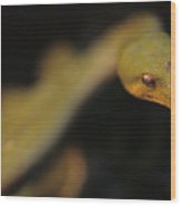 A Curious Immature Green Tree Python Wood Print