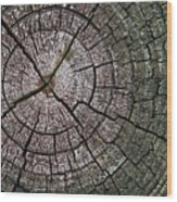 A Cut Above - Patterns Of A Tree Trunk Sliced Across Wood Print