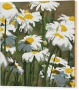 A Daisy A Day Wood Print