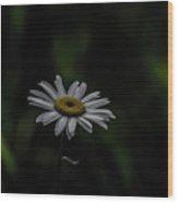 A Daisy At Nightfall Wood Print