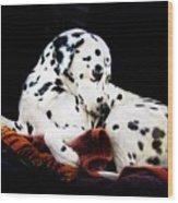 A Dalmatian Prince Wood Print