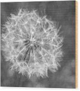 A Dandelion Black And White Wood Print