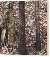 A Dapper Birth In The Midst Of Hemlocks Wood Print