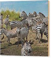 A Dazzle Of Zebras Wood Print