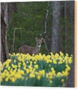 A Deer And Daffodils 4 Wood Print