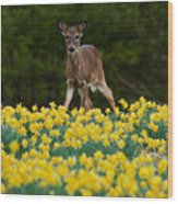 A Deer And Daffodils IIi Wood Print