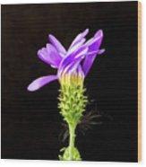 A Desert Flower Wood Print
