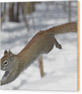 A Devil Named American Red Squirrel Wood Print