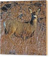A Doe   A Deer Wood Print