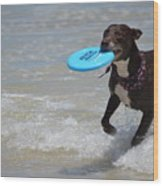 A Dog And Her Frisbee Wood Print