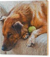 A Dog And His Tennis Ball Wood Print