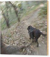 A Dog Backpacking On Pine Ridge Trail Wood Print