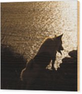 A Dogs View Wood Print
