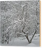 A Dogwood Sleeps While The Snow Falls Wood Print