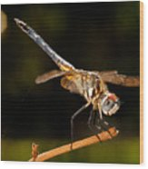 A Dragonfly Wood Print