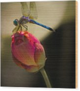 A Dragonfly Rests Momentarily On A Lotus Bud Wood Print