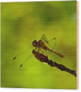 A Dragonfly Smile Wood Print