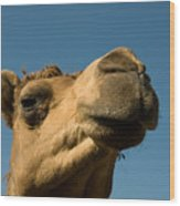 A Dromedary Camel At The Lincoln Wood Print