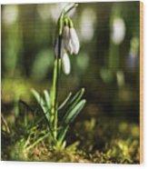 A Drop Of Spring Wood Print