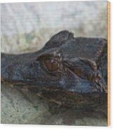 A Dwarf Caiman Paleosuchus Palepebrosus Wood Print