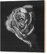 A Fading Rose Wood Print