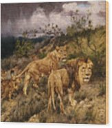 A Family Of Lions Wood Print