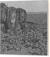 A Farmer Using A Cultivator  Wood Print