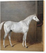 A Favourite Grey Horse Belonging To George Reed Standing In A Loose Box Wood Print