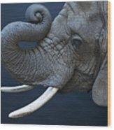 A Female African Elephant, Loxodonta Wood Print