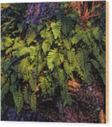 A Fern Botanical By H H Photography Of Florida Wood Print