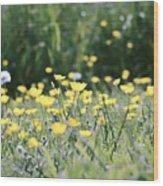 A Field Of Buttercups Wood Print